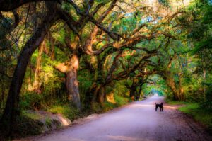 dog under live oak tree canopy in Mount Pleasant