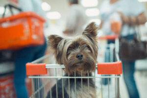 Yorkie dog in seat of shopping cart at a Mount Pleasant store.