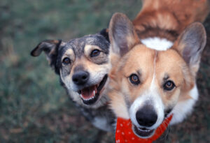 two rescue dogs playing